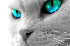 Кошки владеют секретом воздействия на человека