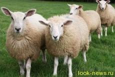 В Париже штат работников ЖКХ пополнился овцами