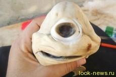 Зубастый Циклоп: в Мексике поймана одноглазая акула-альбинос