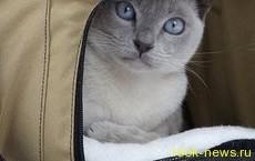 Краткая история о кошке, которая крадет мужские трусы