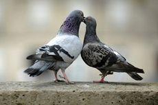 Почтовые голуби доставили данные быстрее Интернета