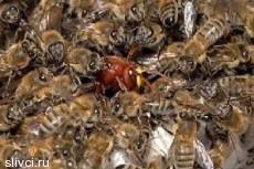 Дикие пчелы напали на футболистов