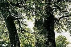 В Германии подросток прожил в лесу 5 лет