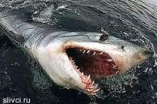 На гольф-курорте в Австралии поселились акулы