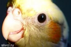 Из торгового автомата спасли пьяного попугая