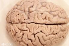 Секс меняет мозг