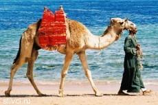 Русские туристы отдыхают в Египте последние месяцы