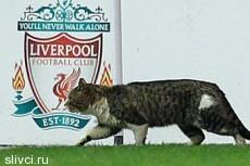 """Побывавший на поле """"Ливерпуля"""" кот стал звездой интернета"""