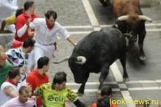 Семь человек пострадали от взбесившегося быка в Испании