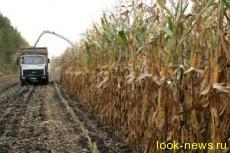 Беларусь отказалась от кукурузы в чернобыльской зоне