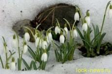 Весна становится короче с каждым годом