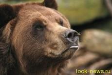 Медведь в Колорадо ограбил магазин с кондитерскими изделиями
