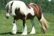 Танкер – порода удивительных лошадей