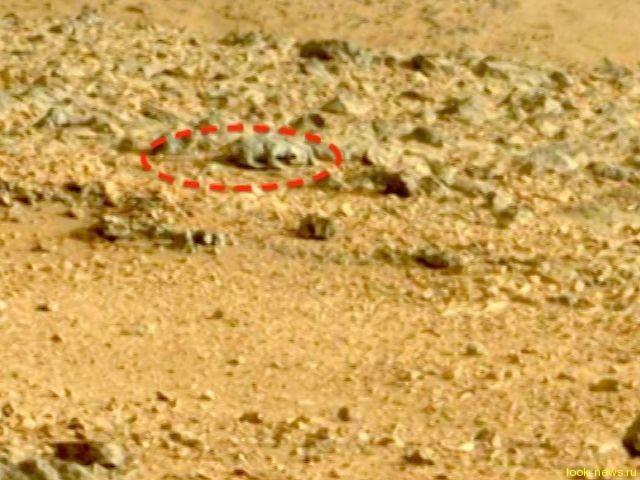 На Марсе обнаружилась ящерица