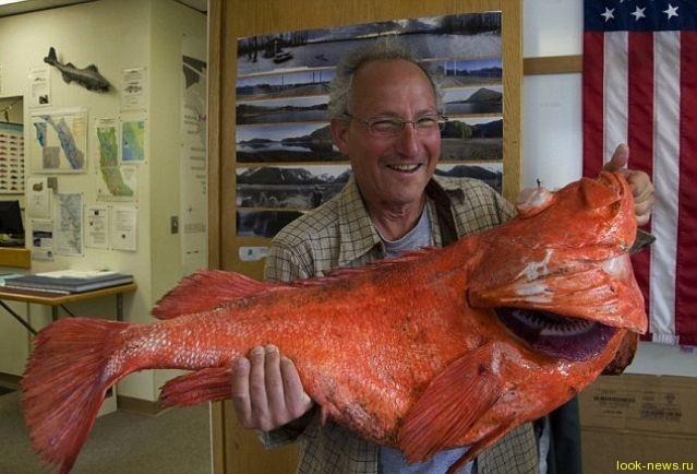 Рыбак поймал 200-летнего окуня