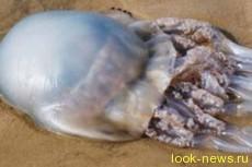 Человечеству придется есть медуз
