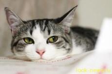 Кошки – мастера обмана