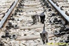Котята блокировали метро в час пик