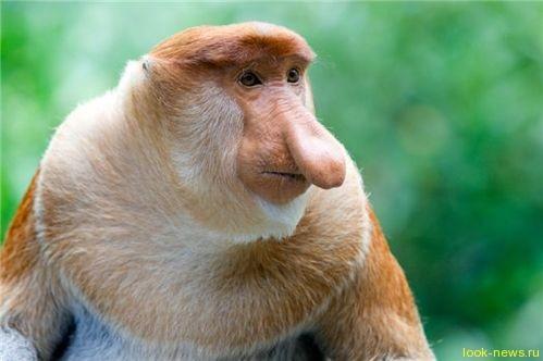 Стало известно самое уродливое существо на планете