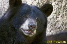 Канадец отбился от медведя, схватив его за язык