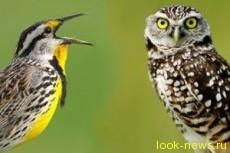 Люди-жаворонки более счастливы, чем «совы», зато вторые богаче и умнее