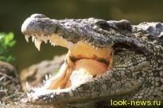 Питерский дворник нашел на помойке крокодила