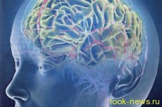 Загадка гениального мозга