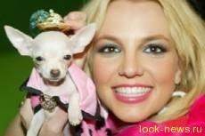 Бритни Спирс потратила $30 000 на своих собачек