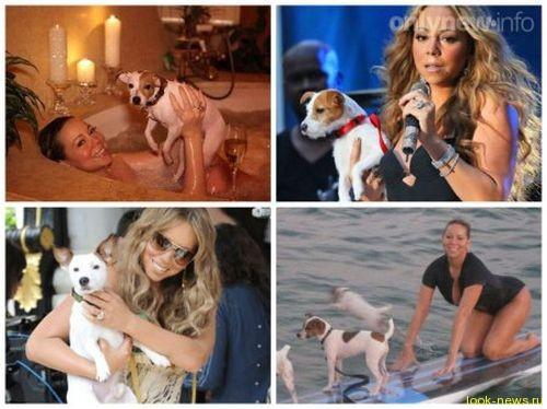 Мэрайя Кэри и Ник Кэннон судятся из-за собак