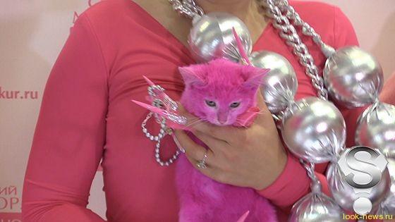 Перекрашенный Леной Лениной в розовый цвет котенок погиб от интоксикации