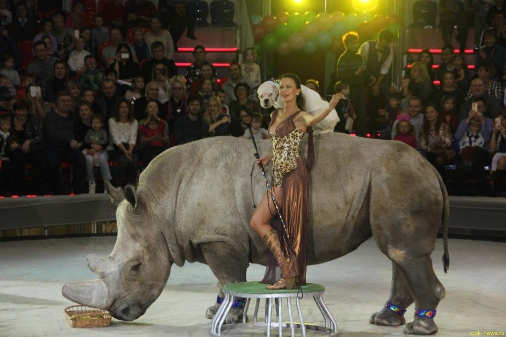 Денис Клявер испугался носорога