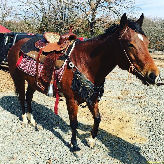Гвен Стефани получила в подарок лошадь