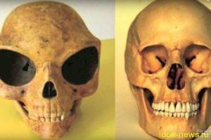 В Дании найден череп с огромными глазницами