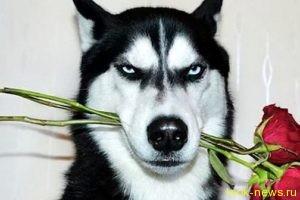 Сердитая собака позволила хозяйке справиться с депрессией и заработать